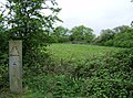 Triangular Meadow - geograph.org.uk - 446238.jpg