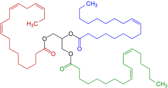 "Allyl group - A representative triglyceride found in linseed oil features groups with both singly and doubly allylic CH2 sites (<span style=""color:green;"">linoleic acid</span> and alpha-linolenic acid) and singly allylic sites (<span style=""color:blue;"">oleic acid</span>)"