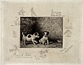 Two puppies are playing next to their bowl; vignettes show c Wellcome V0020954.jpg