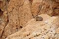 Tze'elim Canyon 16387 (11851943943).jpg