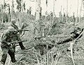 US Army trrops clear a Japanese bunker near Buna.jpg