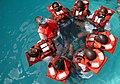 US Navy 090205-N-1655H-476 John LaFargue conducts water survival training with Senegalese marine biologists.jpg