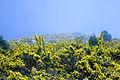 Un San Fins amarillo (16933031756).jpg