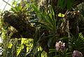 Un coin de forêt exotique dans la serre.jpg