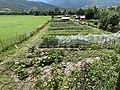 Un joli potager à Embrun (Hautes-Alpes).jpg