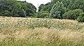 Uncut Field at Trent Park for wildlife, London, N14 - geograph.org.uk - 316809.jpg