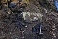 Upper Ordovician-Dalbian GSSP-4.JPG