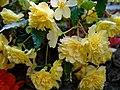 Urn planter flowers at Easton Lodge Gardens, Little Easton, Essex, England 1.jpg