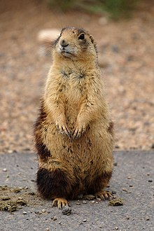 Prairie Dog Central Great Train Robbery