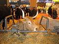Vache Béarnaise SIA2016.JPG