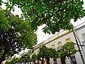 Valverde del Camino (Huelva) - 49038657626.jpg