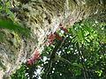 Vegetación de la Reserva de la Biosfera La Amistad Panama (RBLAP) 27.JPG
