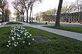 Versailles Avenue de Paris Sidewalk 2016-05-01 flower bed (02).jpg