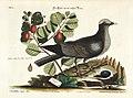 Verzameling van uitlandsche en zeldzaame vogelen (Tab. L) (7894195680).jpg