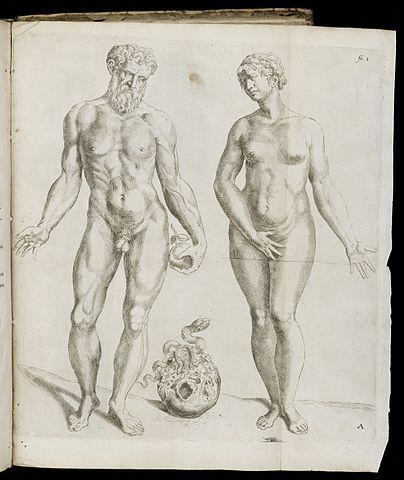 Адам и Ева. Иллюстрация из издания «О строении человеческого тела», 1642