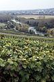 Vigne Pinot noir (Vue sur la Marne) Cl.J.Weber08 JPG. (23049534934).jpg