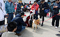 Visitors and Cosplayers around Shiba Inu in FF25 20150201.jpg
