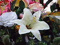 WHITE FLOWER PICTURE.JPG