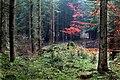 Wald in Olfen - Alter Postweg.jpg