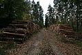 Waldweg Forst Rundshorn IMG 3896.jpg