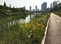 Walk Path along Ansan Canal.jpg