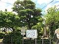 War Council Pine, Okehazama-Shinmei Midori Ward Nagoya 2012.JPG