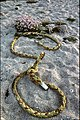 Washed-up rope - geograph.org.uk - 654841.jpg