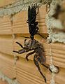Wasp x spider 2.jpg