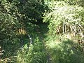 Wassenaar - 2011 - panoramio (2).jpg