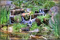 Waterfall At Descanso Gardens (234365263).jpeg