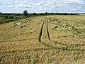 Weather damaged cereal crop - geograph.org.uk - 511938.jpg