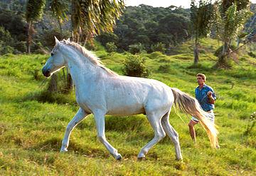 https://upload.wikimedia.org/wikipedia/commons/thumb/8/88/White_horse-K8855-1.jpg/360px-White_horse-K8855-1.jpg