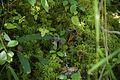 Wild mushroom 5046.jpg