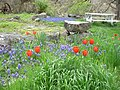 Wildflowers and Picnic Tables, Wallowa-Whitman National Forest (26195908884).jpg