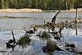 Wildlife - panoramio (3).jpg