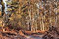 Woodland trail - RSPB Sandy (32459010775).jpg