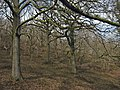 Woods, Dowsborough - geograph.org.uk - 1766913.jpg