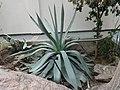 World Deserts - US Botanic Gardens 13.jpg