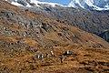 Yaphu 56900, Nepal - panoramio (12).jpg