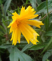 Yellow coloured flower (1).jpg