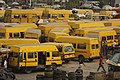 Yellowbuses.jpg