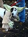 Yodog (1795024383).jpg