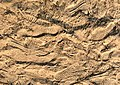 ZEGG original sandy soil with few nutrients.jpg