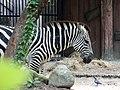 Zebra AZG.jpg