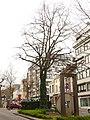 Zottegem Heldenlaan Vredesboom (6) - 191118 - onroerenderfgoed.jpg