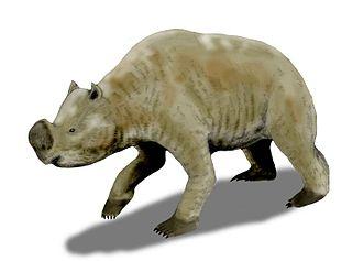 1858 in paleontology - Zygomaturus