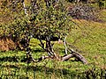 Čertež - panoramio (2).jpg