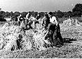 Żołnierze podczas pracy przy żniwach w ZSRR (21-171-1).jpg