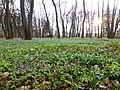 Ботанический сад им Келлера 02.jpg