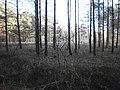 Біля дороги Турійськ-Радовичі - panoramio.jpg